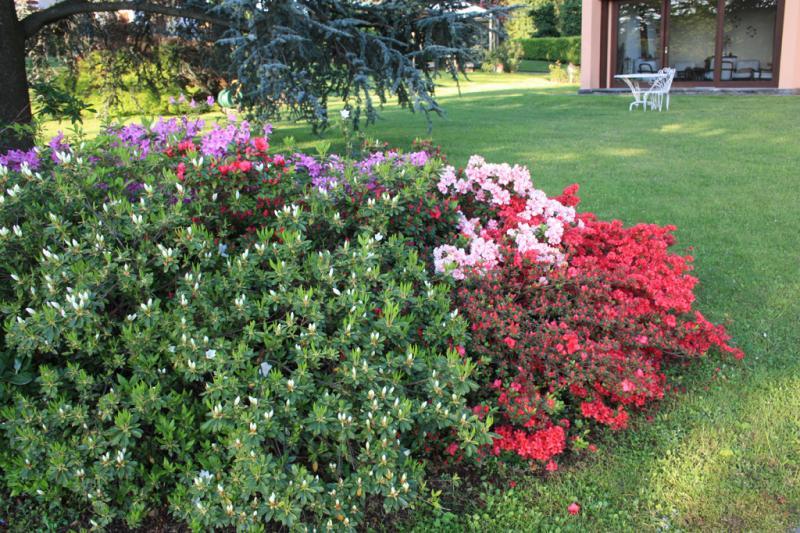 Flowers (Azalea)